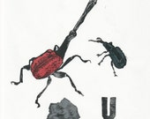 Weevil weevil Rock U linocut - Humour and Terrible Puns Collection - Insect Print