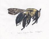 Eastern Carpenter Bee Linocut - Handprinted Xylocopa virginica - Bee Biodiversity Print Collection