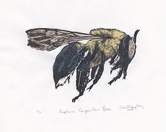 Eastern Carpenter Bee Linocut - Handprinted Xylocopa virginica - Bee Biodiversity Print Collection