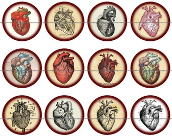 """1"""" Inch Anatomical Heart Pins, Flatback Buttons, or Magnets 12 Ct."""