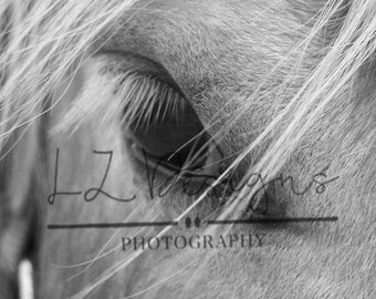 Horse Eye Close-up Black & White Digital Download