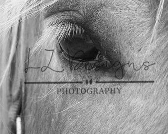 Horse Closeup Digital Download