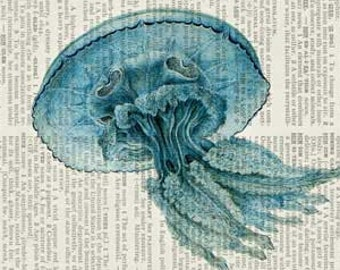 jellyfish I dictionary page print
