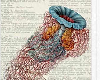 jellyfish - medusa book page print