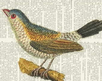 bird IV dictionary page print
