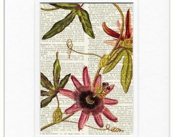 pink passion flower print