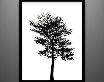 """Papercut, Pine, 18x24"""" framed original hand-cut paper art"""