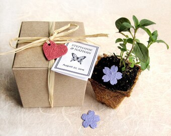 100 Plantable Wedding Favors with Biodegradable Pots and Flower Seed Paper - Favor Boxes - Herb Seed Planting Kit - Baby Shower Favors