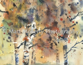 Fall Series birch trees Fine Art Print from original watercolor