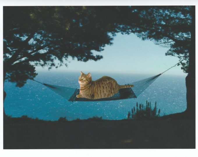 It's a cat's life blank greeting card