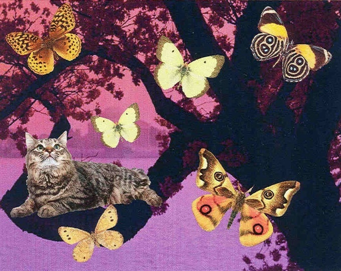 Kitty Dreams notecard