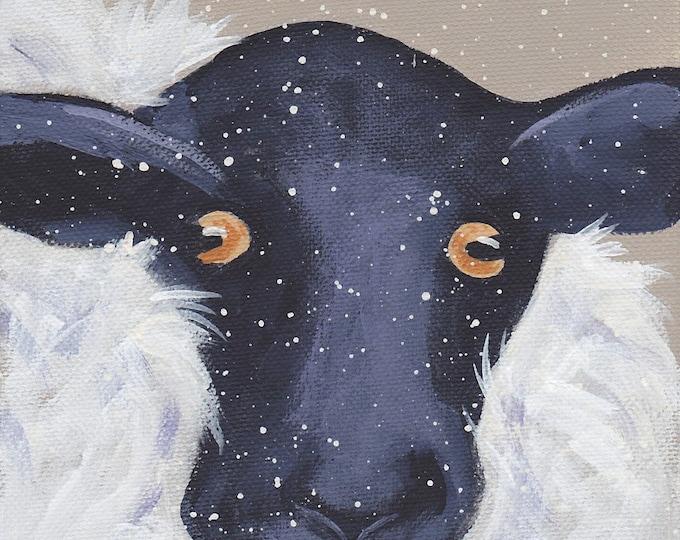 Snowy lamb winter sheep Christmas card