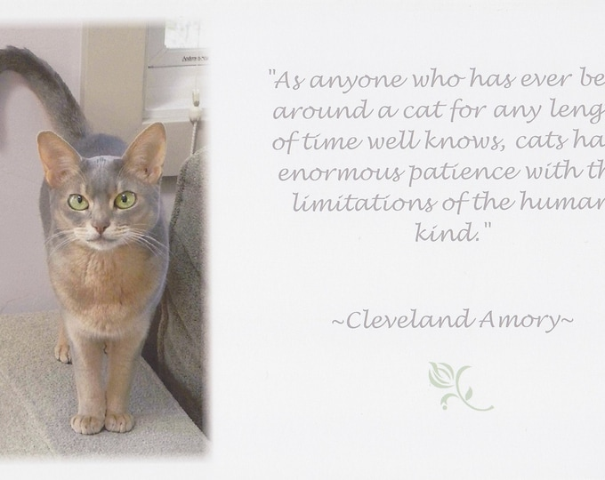 Cat Wisdom quote LARGE card