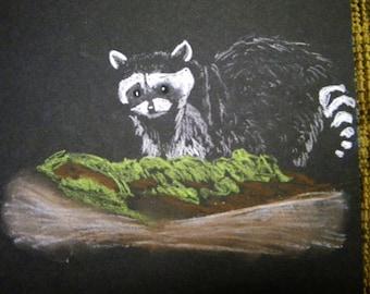 Raccoon Pastel Drawing