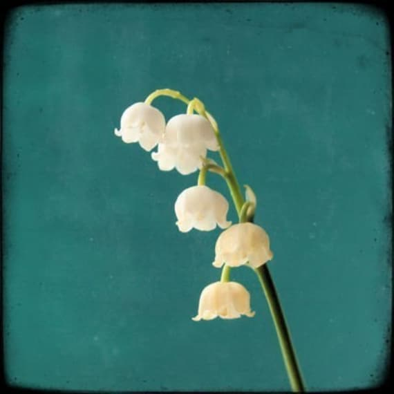 Flowers Similar To Lilies: Items Similar To Lily Of The Valley Flower Photography On Etsy