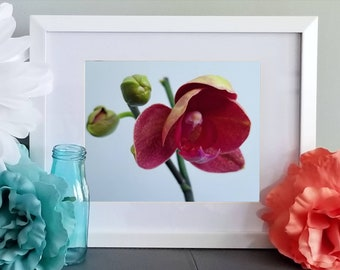 Orchid Bloom by Lindsay Gordon Digital Download Photography High Resolution Photo Home decor Landscape