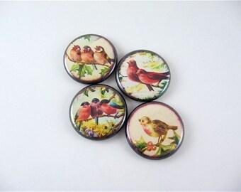 Birds / 4 Fridge Magnets / Vintages Images 1188