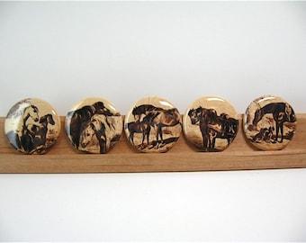 Five Equestrian Fridge Magnets - 1 Inch button magnets - Sepia Horses no 1