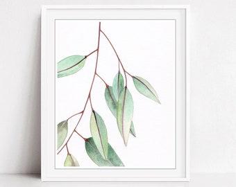 Eucalyptus Leaves Print, Sage Green, Botanical Illustration Print, Fine Art Watercolor Print, 8x10 11x14 Print - Eucalyptus Leaves One