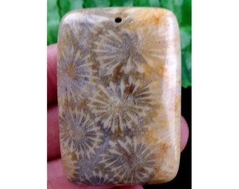 Beautiful Natural ORGANIC Fossil Coral Pendant Bead 33x47x7mm