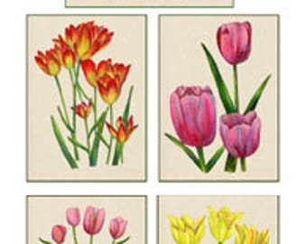 Set of 10 Floral Greeting Cards Tulips