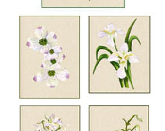Set of 10 Floral Greeting Cards White Flowers