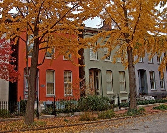 Autumn near the square – fall in St. Louis photograph