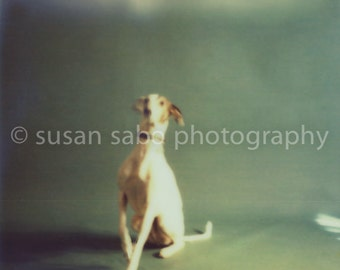 DOGS POSING -  Set no. 5, Dogs - Set of 4 Blank Note, Greeting, Thank You, or just because Cards w/Envelopes