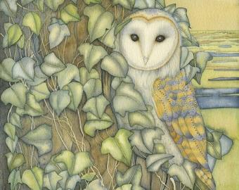 Barn Owl at Stifkey