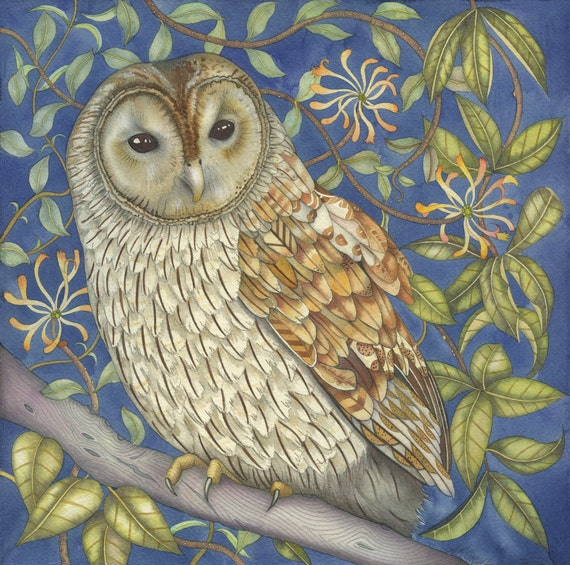 Fine art print of an original painting: 'Tawny Owl in the Honeysuckle'