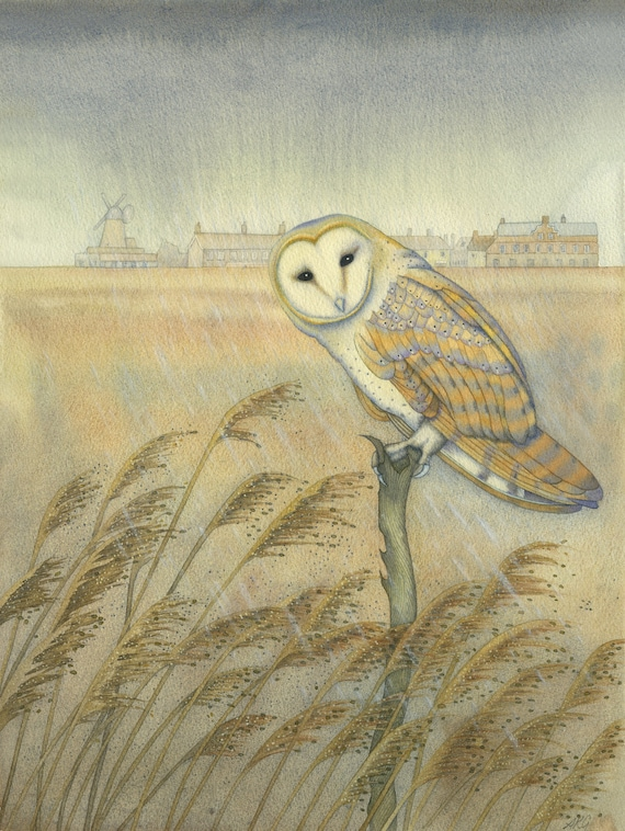 Fine art print of an original painting: 'Barn Owl at Cley'