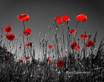 """Poppy Wall Decor -  5x7 """" Poppies Field Photo - Black and Red Print - Nature Photography for Your Home or Office by Vaida Petreikis"""