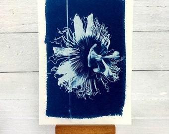 Passionfruit Flower Art, Original Cyanotype, Floral Print, Passiflora 4x6 inches