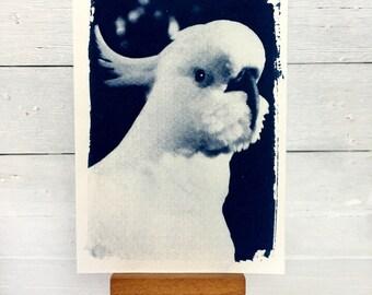 Cyanotype Cockatoo, Art Print, Wildlife Picture, Bird Art, 4x6 inches