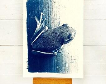 Frog Print, Original Cyanotype, Frog Picture, 4x6 inches, Wildlife Print