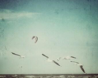 Soaring Seagulls 5x5 Birds in Flight Photograph - Nature Photography, Ocean Birds Fine Art Photo Print