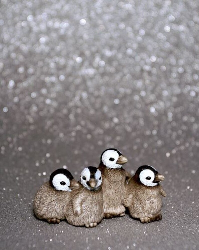 Baby Penguins  Photograph  Various Sizes image 0