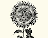 Sleeping Sunflower Cat - Print