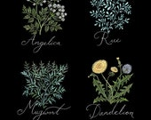 Herbs for Protection - Print