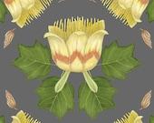 Liriodendron tulipifera - Print