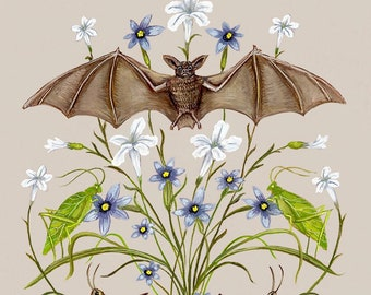 Bat with Katydids and Grasshoppers - Print