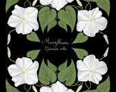 Moonflower - Print