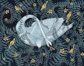 Swan Entangled - Print