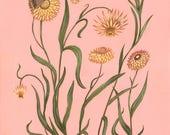 Strawflowers - Original Painting