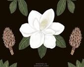 Magnolia grandiflora - Print