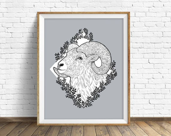 Rocky Mountain Bighorn - art print
