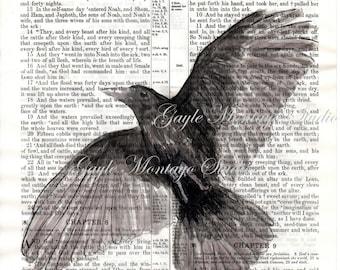 Raven CROW  black bird Art print © Genesis / He sent forth a Raven 4x6, 5x7, or 8x10 DIGITAL Instant DOWNLOAD