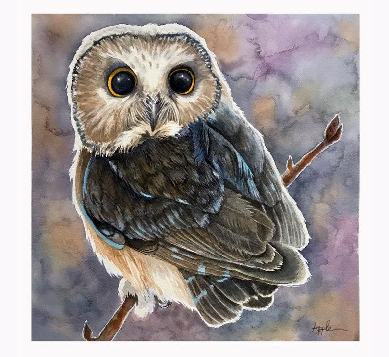 NEW Northern Saw-whet Owl Print of Original Wildlife image 0