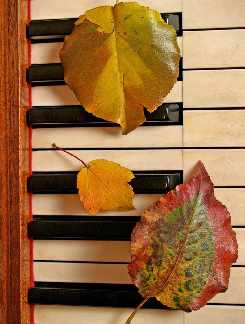 Three Autumn Leaves on Piano - Blank 5 X 7 NOTECARD frameable FALL Nature  Art Photo with FREE origami crane