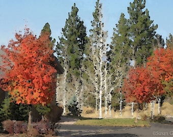 Red Autumn Trees Print |  Aspen Trees with Pines | Fall Neighborhood Digital Print | Nature Photography | BUY One CHOOSE 2nd for Free